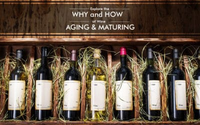 All About Barrels – Explore the Why and How of Wine Aging and Maturing